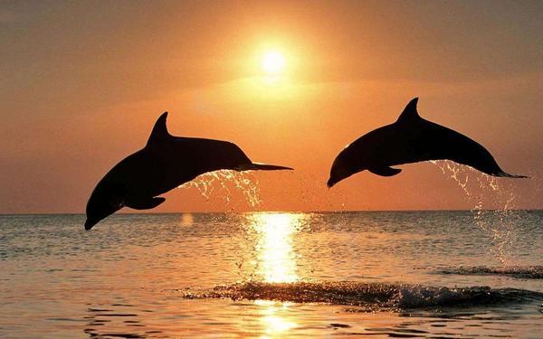 最美海豚.jpg